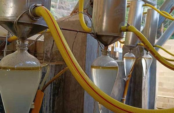 oud oil Distillation